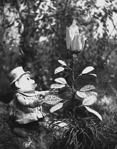 B-W-pogle-and-plant